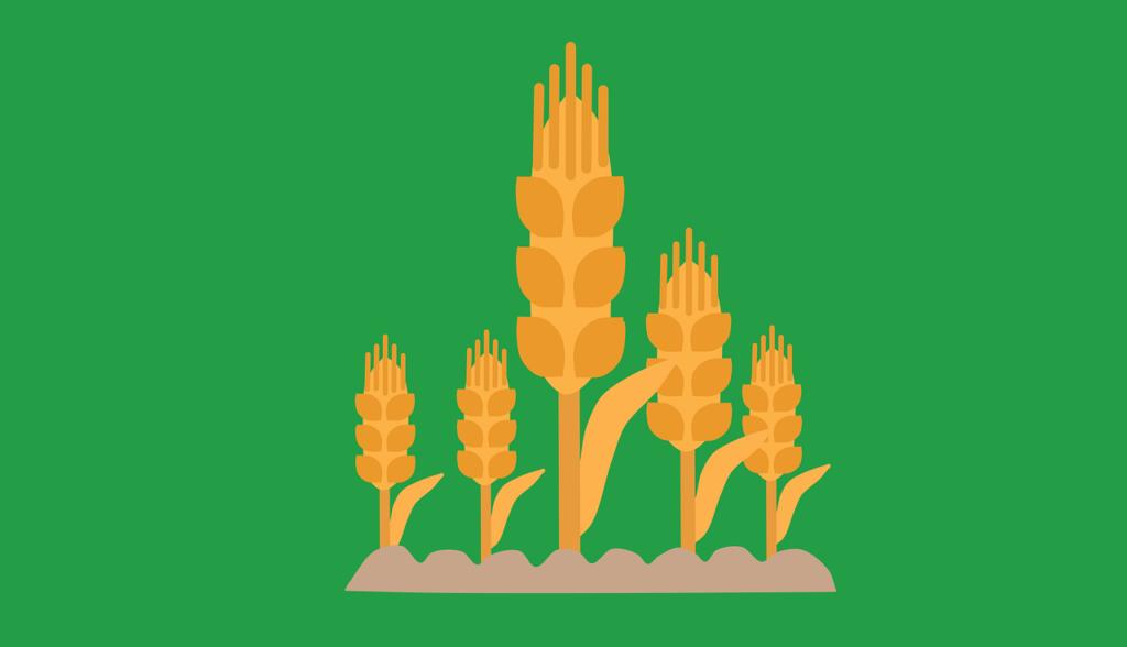 小麦播種のまとめ